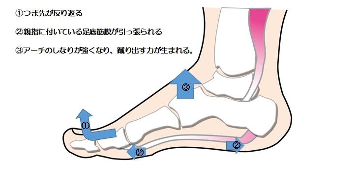 アーチと筋膜