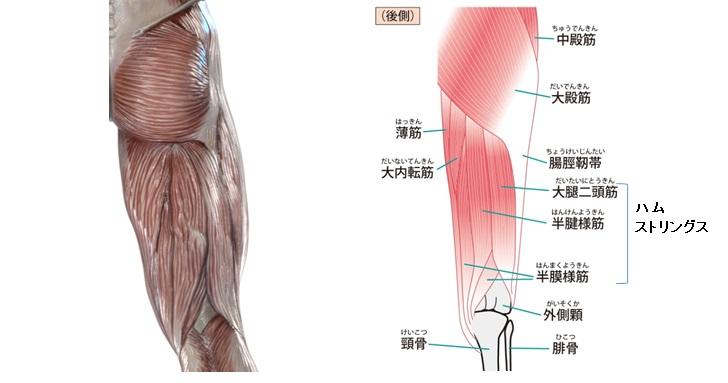 お尻と足の筋肉