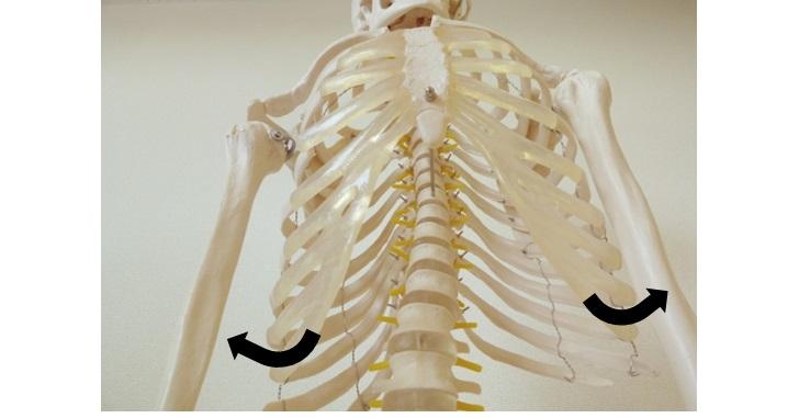 肋骨の開き