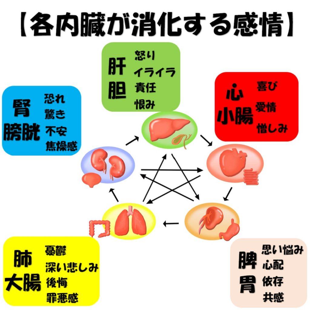 東洋医学の五行と感情を消化する内臓を説明した画像