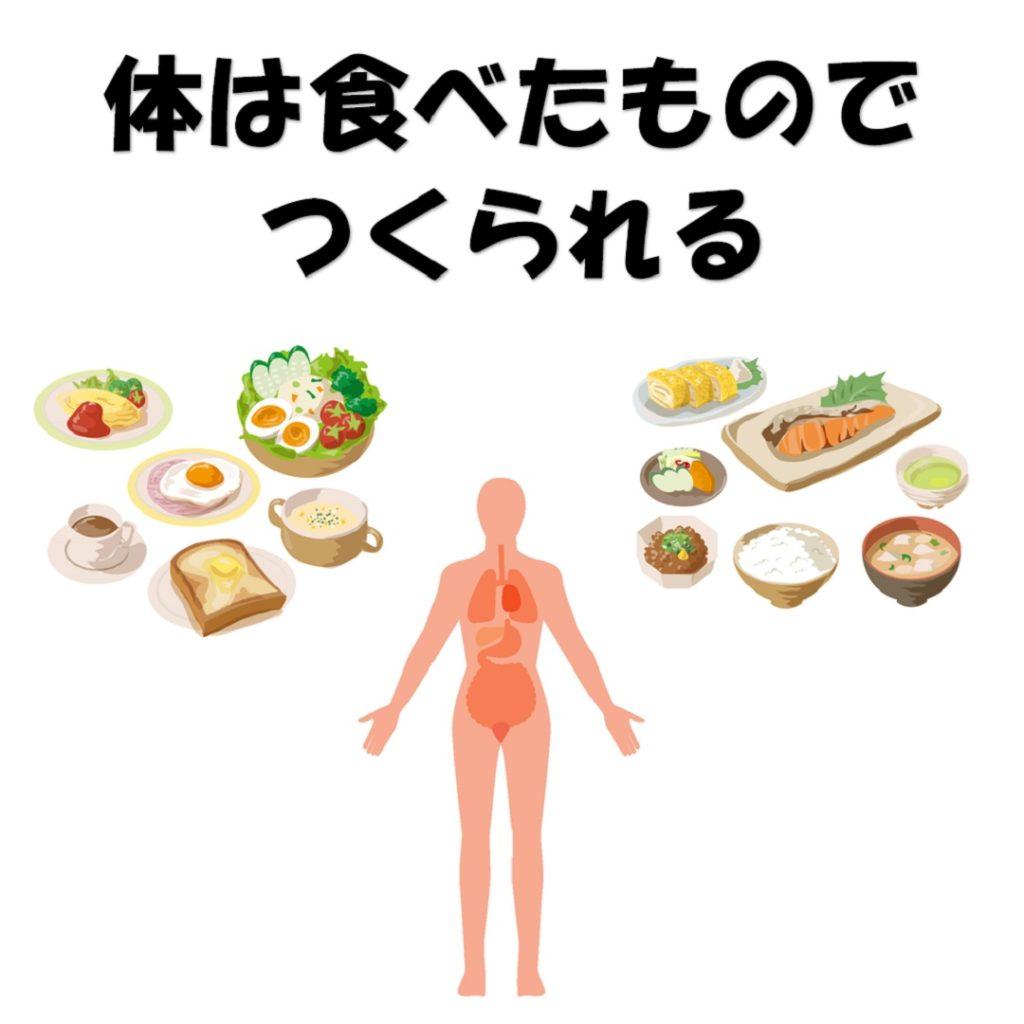 体は食べたものでつくられる
